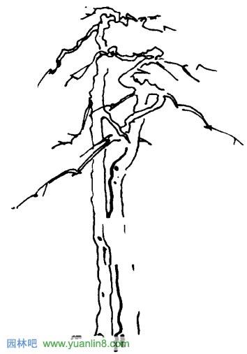 乔木树冠表现-树冠画法_景观手绘_园林吧论坛