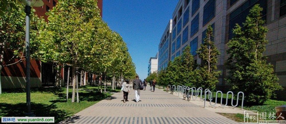 校园景观设计 美国加州Mission Bay大学图片