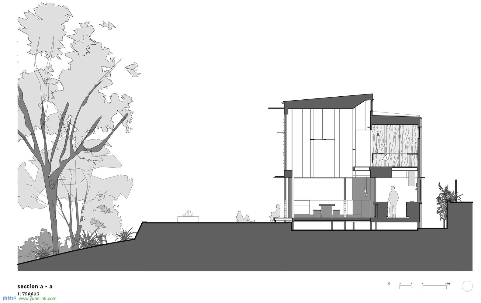 PBArchitect_Corymbia_04_section