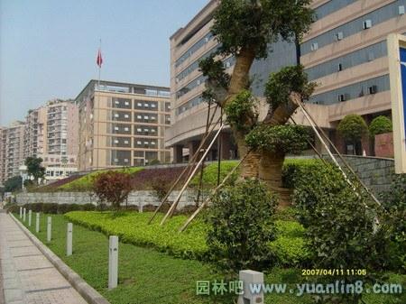 大渡口区政府办公大楼环境景观改造[图]