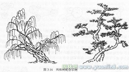 园林植物种植中丛植的技术介绍 附图