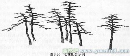 园林手绘线描树木