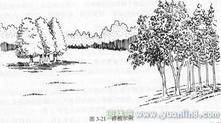 乔木园林手绘线稿画法高清