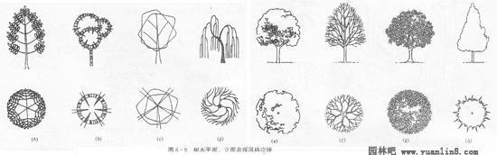 风景速写树木的步骤