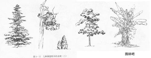 > 园林构景中树木的立面表现附图例    (2)从树木的第一个主要分枝画