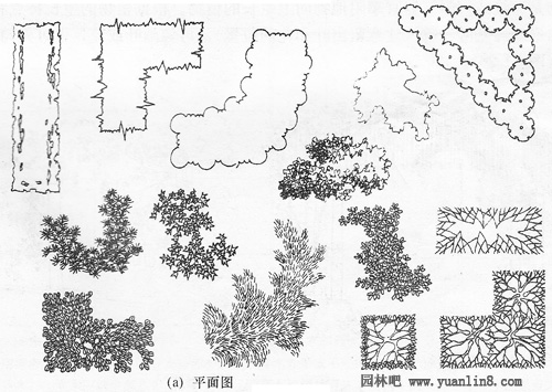 植物设计手绘平面图_植物设计手绘平面图分享展示