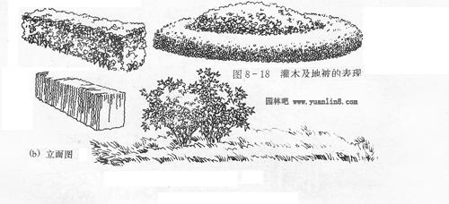 灌木丛马克笔手绘