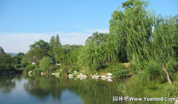 景观快题平面图_利用水生植物构建的水生植物景观图案例-植物配植_园林吧