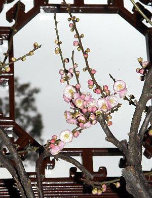 苏州园林中的花窗