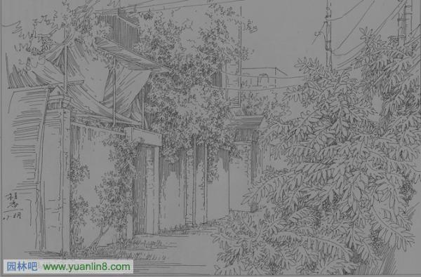 钢笔画手绘技法连载[2]手绘 钢笔画,介绍藤木和植物群落的画法,来自