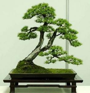 五大盆景艺术_组图赏析中国五大流派盆景艺术-植物花卉_园林吧