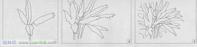 园林钢笔画手绘技法教程[5]