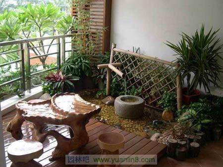 室内适合摆放哪些花卉植物 家庭养花