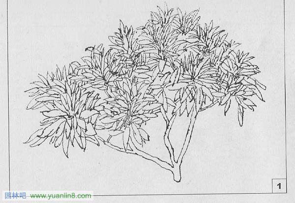 园林钢笔画手绘技法教程[3]