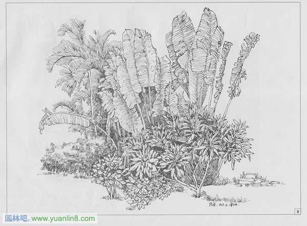 钢笔画教程图片大全_钢笔画教程图片下载; 钢笔画 花图片; 手绘树的