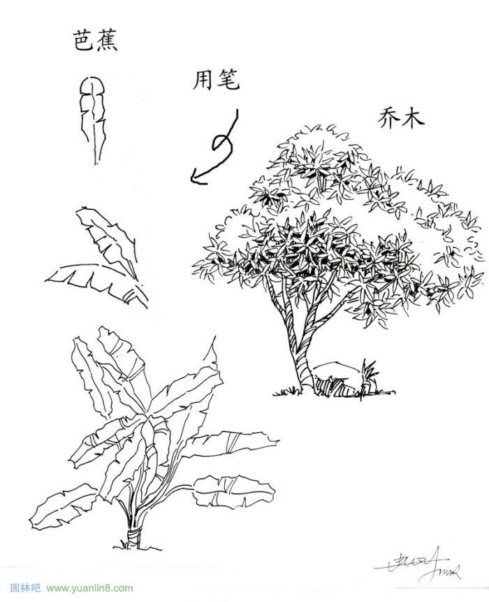 植物景观手绘入门技巧-手绘表现_园林吧