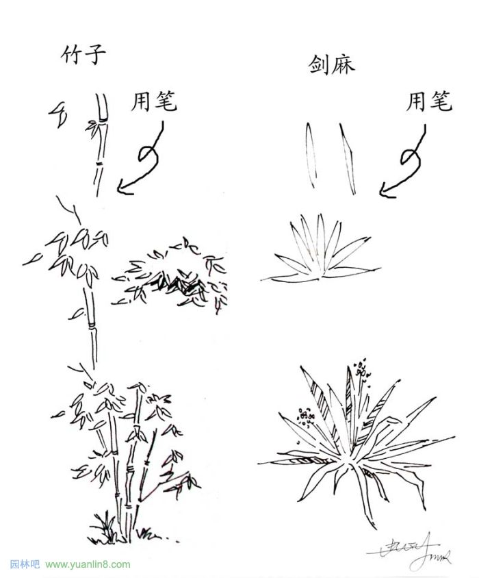 植物景观手绘入门技巧