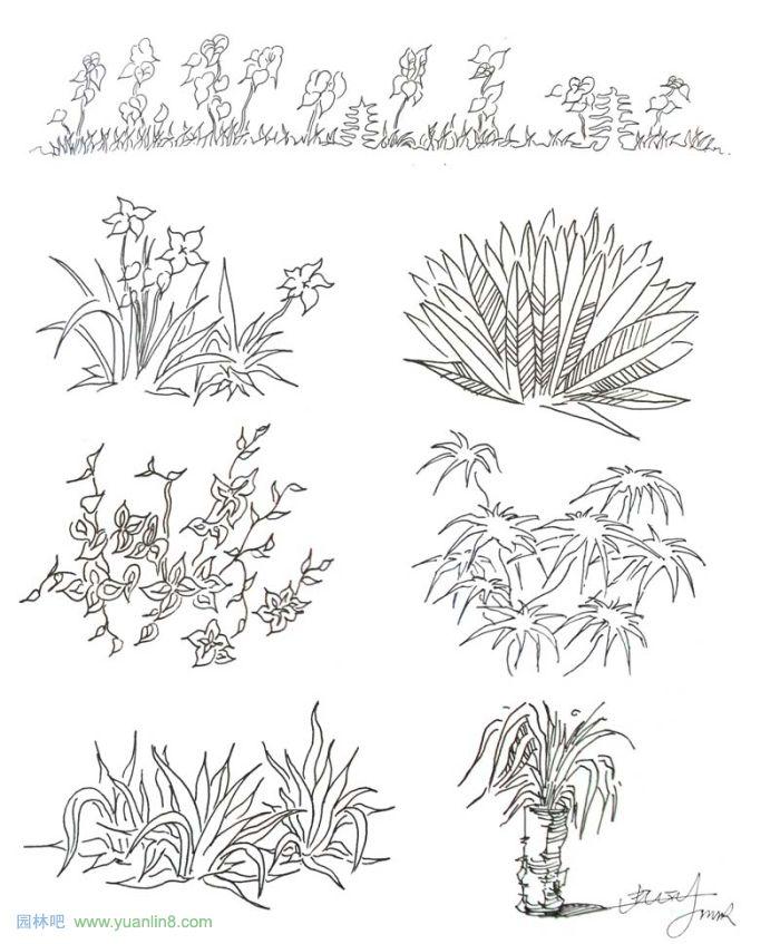 植物景观手绘入门技巧; 简单的钢笔画; 景观手绘技巧_美好时光画室