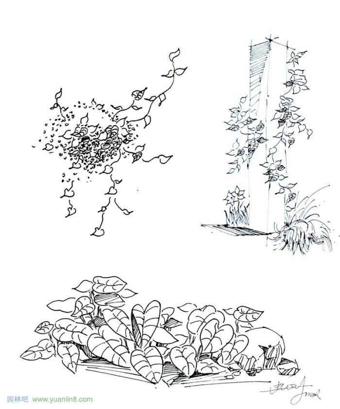 手绘效果图-3.jpg; 植物景观手绘入门技巧; 简单的钢笔画