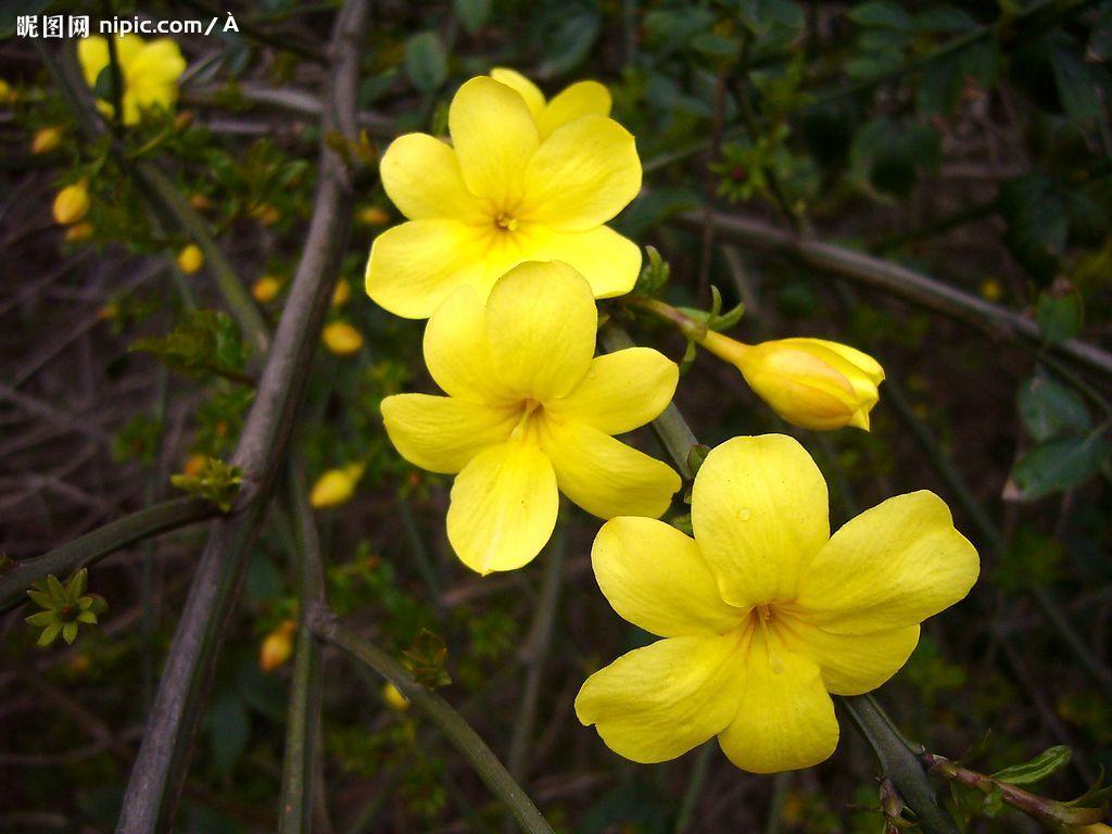 色中色论坛_北方庭院植物配置常用花草树木-规划设计_园林吧