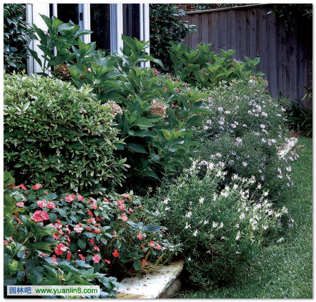 园林景观快题设计的训练--案例解读 植物花卉最新图文 植物花卉推荐